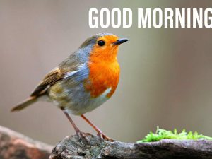 Good morning image with a small bird with cute face