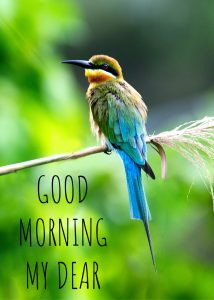 Good morning image with a unique bird