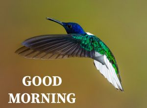 Good morning image with colour full bird