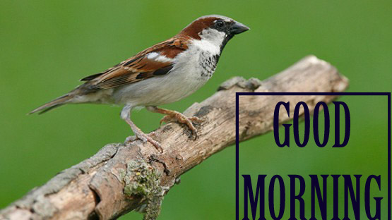Good morning image with sparrow