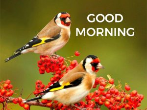 Good morning image with two cute birds