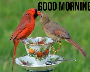 Good morning image with unique birds