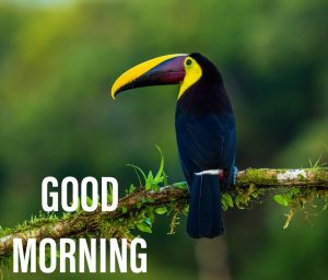 Good morning wishes with a beautifull bird