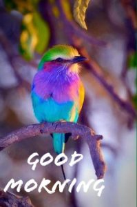 Good morning wishes with a colourfull bird