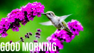 Good morning wishes with bird and flower