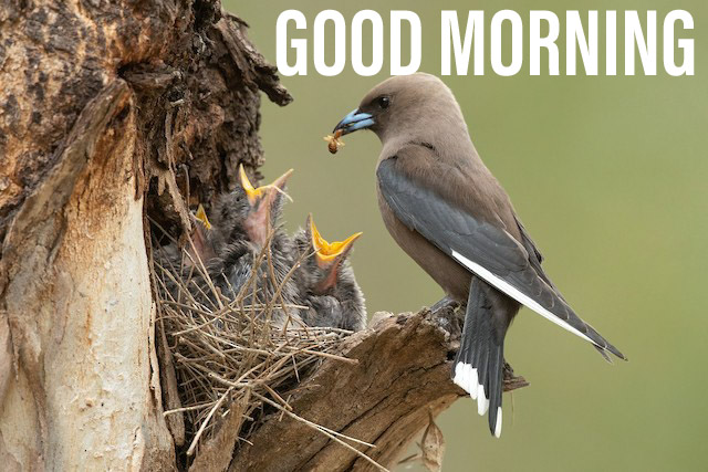 Good morning wishes with bird while eating there child