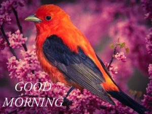 Good morning with red bird